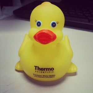 Rubber Ducky!